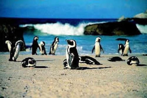 Beach AfricanPenguinColony[2].jpg