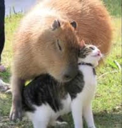 Capybara and Cat friends.jpg