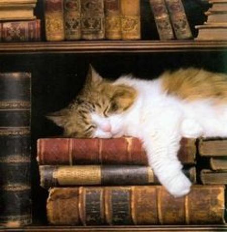 Cat in Library 4c06f573a6d006081e65f1f617a3ef5a[1].jpg