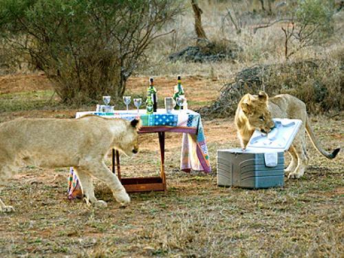 Lions 000918820[1].jpg