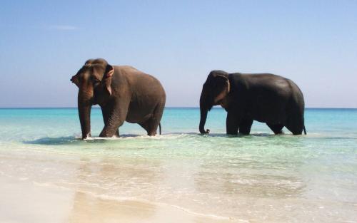 Beach 70545-sea-and-beach-elephant-on-the-sea[1].jpg