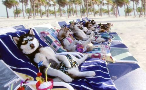 Beach wolves[1].jpg
