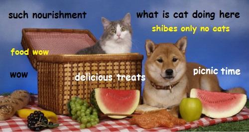 Cat and Dog Picnic 4tworXd[1].jpg