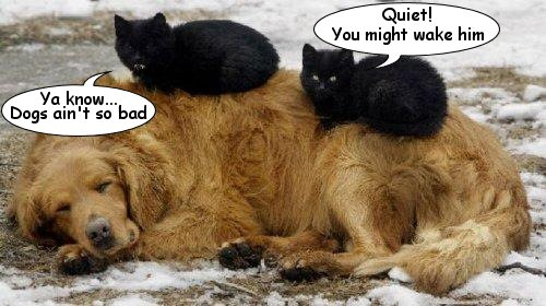 Cats on Dog.jpg