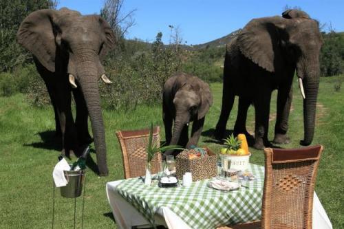 Elephants botlierskop-aElephant-picnic-med-Medium.preview[1].jpg
