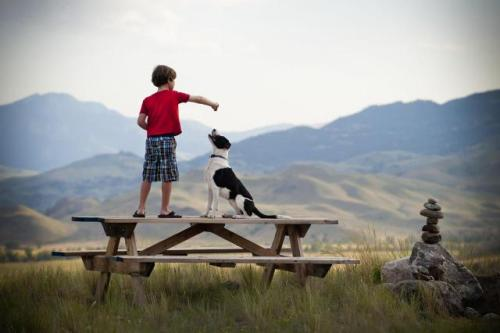 Puppy and boy 185761858-F[1].jpg