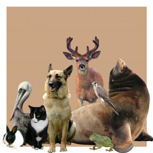 Wild Animal Group animal-welfare-group-photo-v31[1]_0.jpg