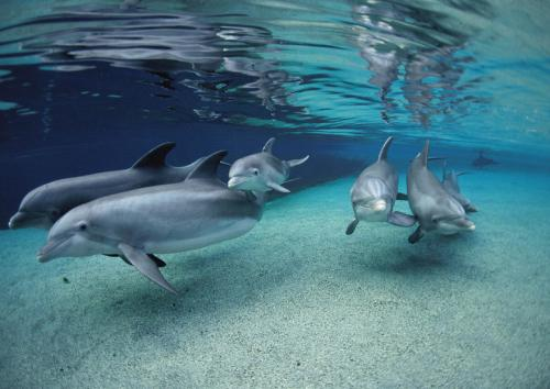 dolphins in blue waters shallow_feature-780x552[1].jpg
