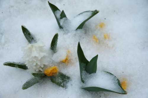 iced flowers_0.jpeg