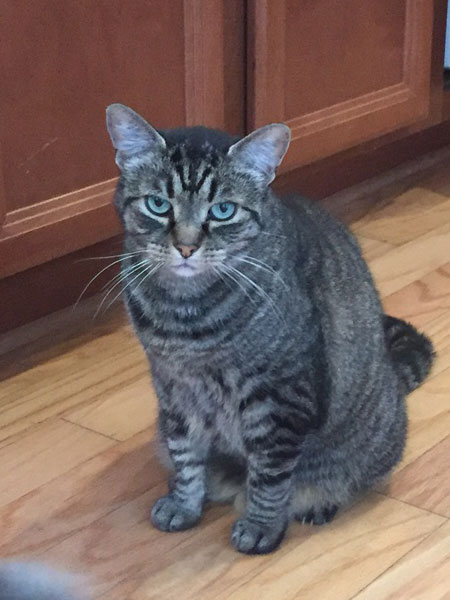 Lucy Cat Po