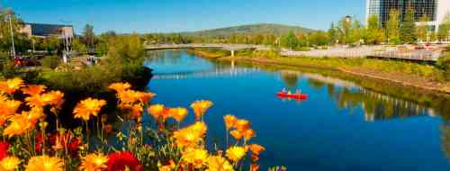 Alaska Banner - Chena River With Yellow Flowers - #6.JPG