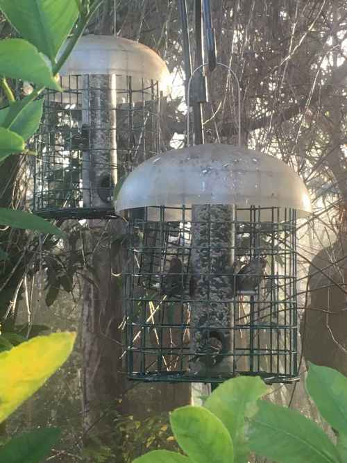 Bird Feeders.jpg