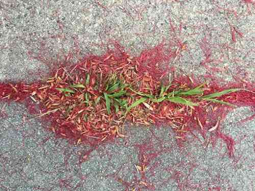 Bottle Brush leaves and grass.jpg