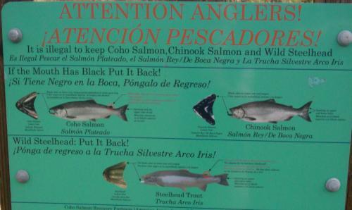 endangeredfish.jpg