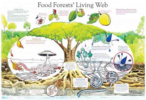 food forest web_1.jpg