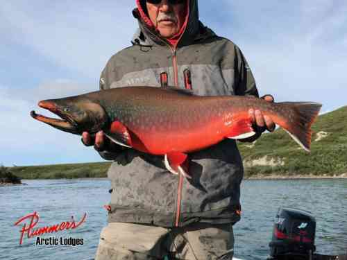 Plummers-Fishing-Lodge-Arctic-Char-4-846x634.jpg