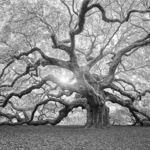 moises-levy-the-tree-square-bw-2_u-l-q12ulvt0.jpg